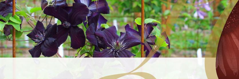 City of Lake Oswego Rogerson Clematis Garden at Luscher Farm
